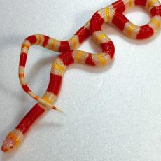 ヘビのイメージ